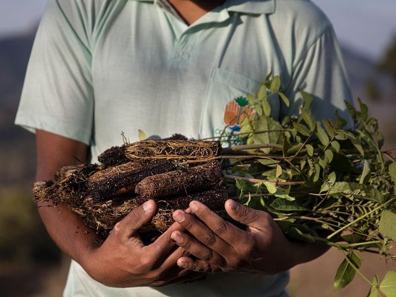 Mantiqueira Conservation Project