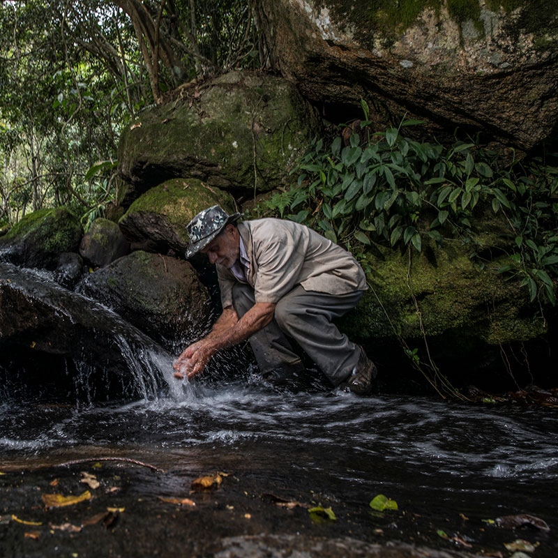 Reforestation and The Doce River